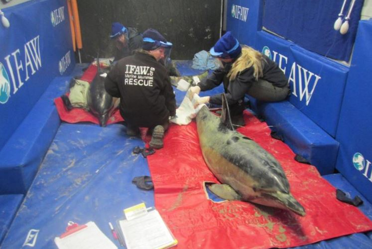 10 dolphins safe after being stranded on Massachusetts shore